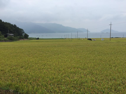 untitled-rice-field-4