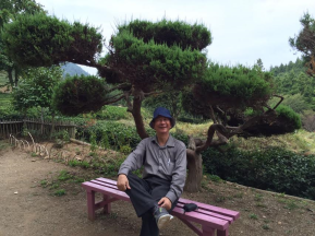 untitled-tea-garden-behind-bonzai-tree