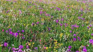 Image result for flower meadows